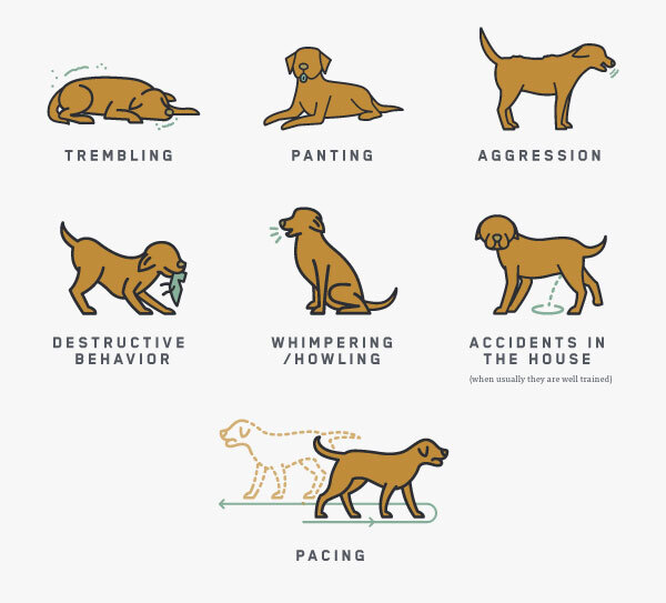 Dog - Lion
