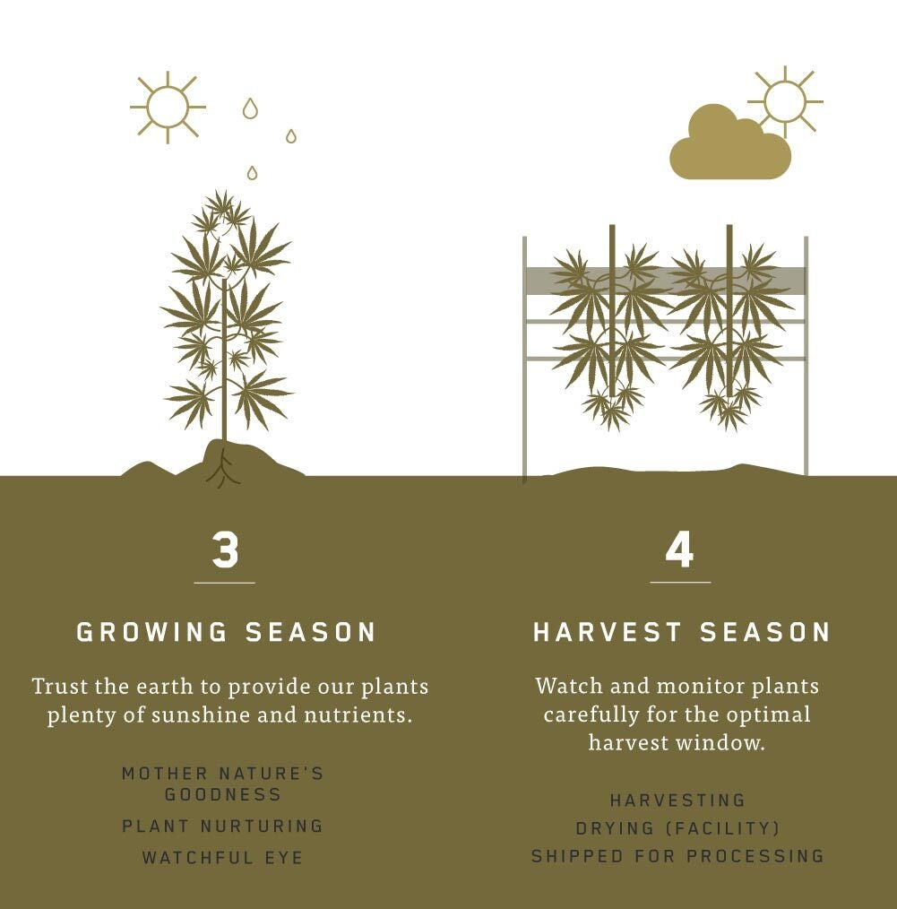 Charlotte's Web™ Spring Process: Growing and Harvest Season
